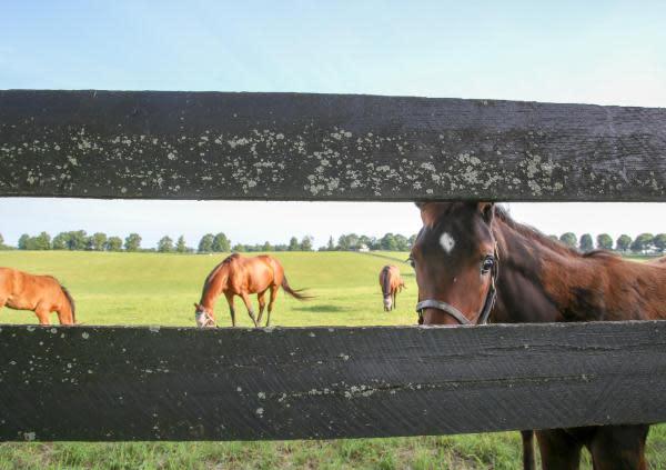 Tour a Horse Farm