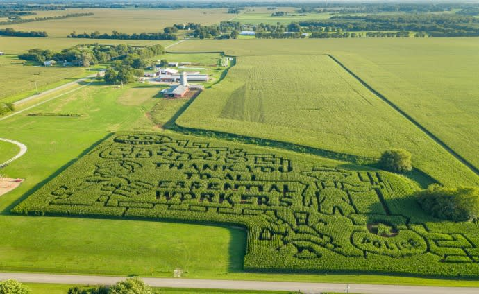 Aerial view of the Chaney's Dairy Barn Corn Maze in Bowling Green Kentucky