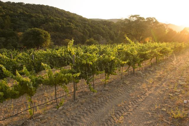 Monterey County Vineyards