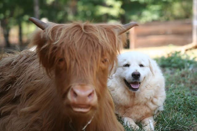 New Beginnings Farm Animals