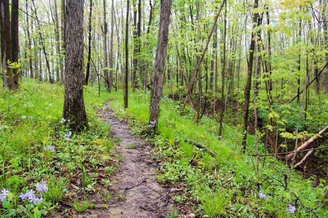 Dustin, Johnson, Whitehurst Nature Preserve