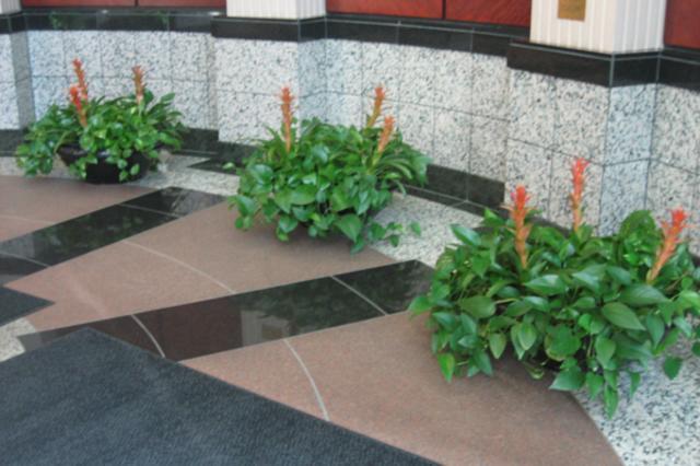 Sand-point-3-plants.jpg
