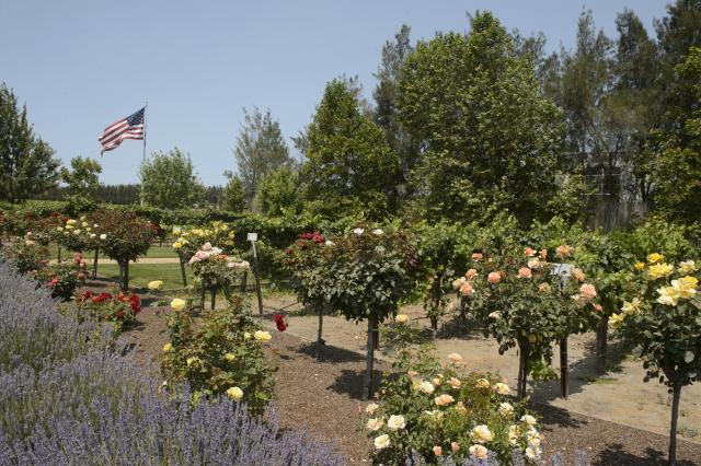 Scheid Winery in Salinas Valley