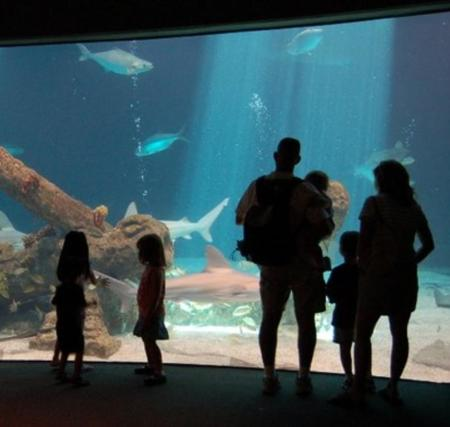 Family watching aquarium tank