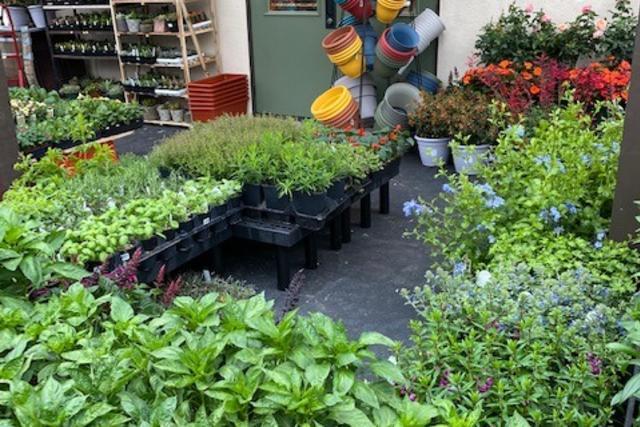 Chet's garden