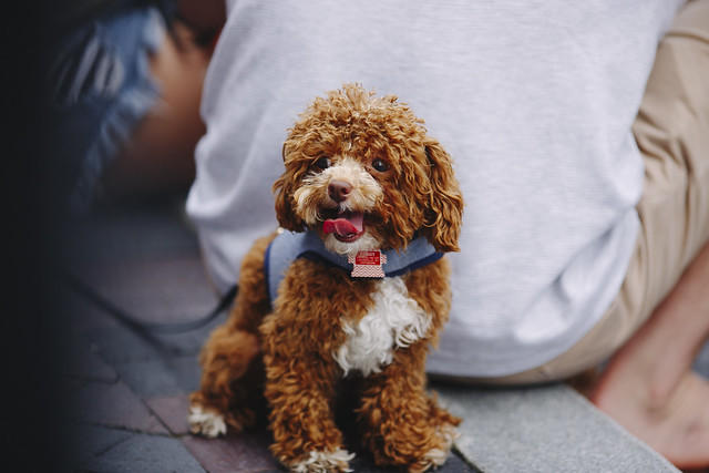 Dog at FOREFest