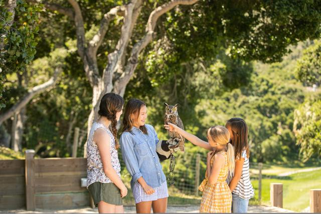 Carmel  Valley Ranch Falcon Experience
