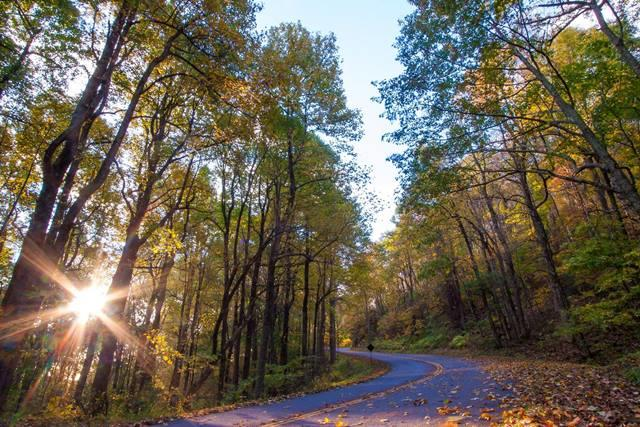 Blue Ridge Parkway Light - Fall Photo