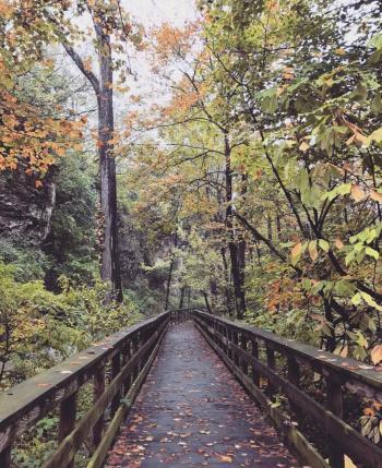 Hayden Falls Boardwalk