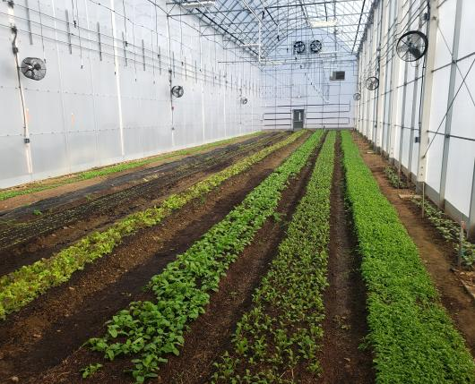Inside Our Greenhouses