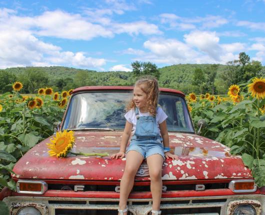 Sunflower Trail