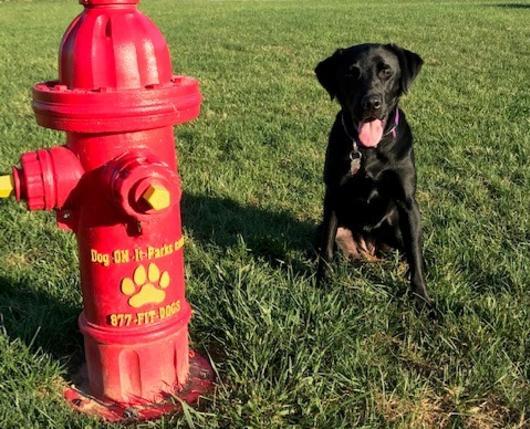 Dixon Street Dog Park Hydrant