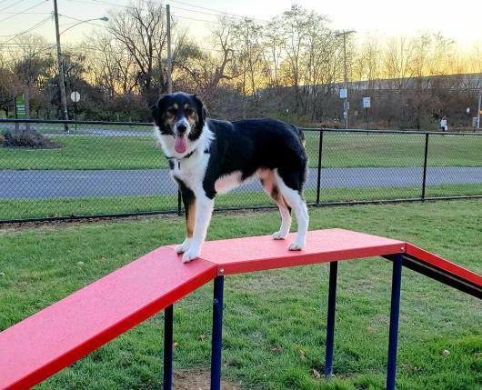 Dixon Street Dog Park