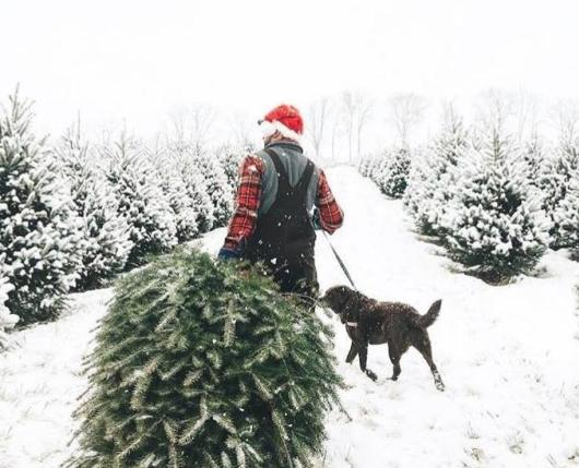 Snowy Christmas tree day