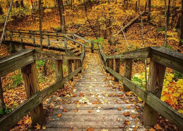 @Matt.Hakey Fort Wayne Trail Fall Photo