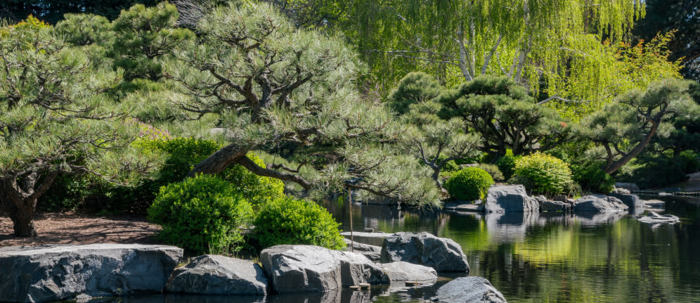 Trees and Water at the Denver Botanic Gardens