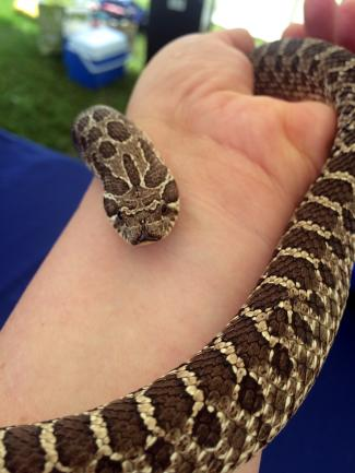 Holding Bruce the Hognose snake.