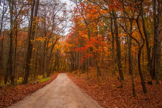 Hoosier National Road in Fall