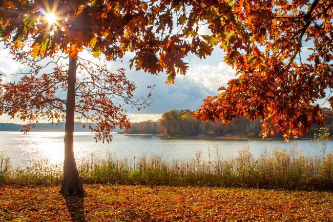 Fall Paynetown