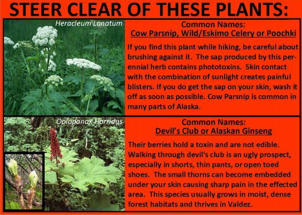 a safety advisory about dangerous plants