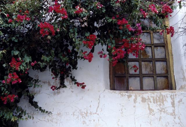 Carmel Cottage