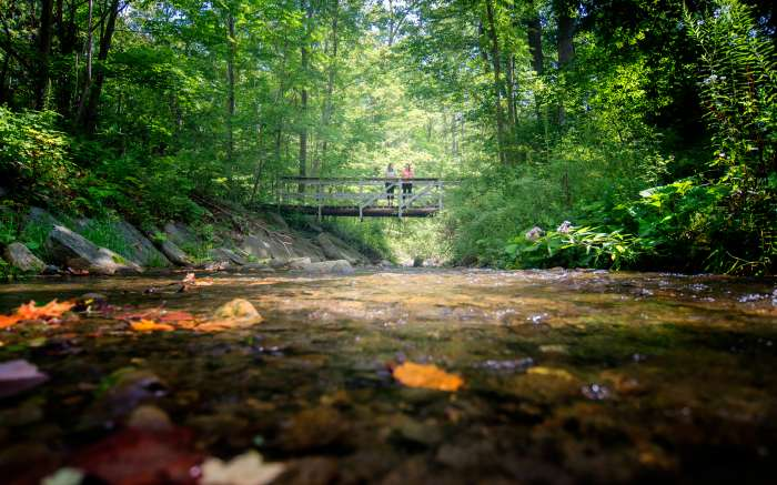 Finger Lakes Trail Hammondsport DSC2464