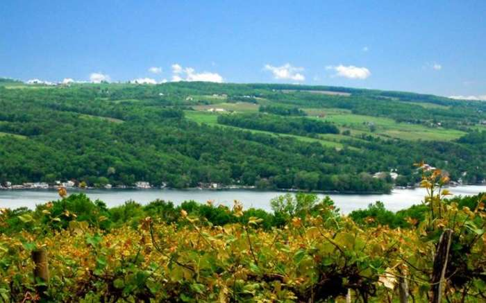 View from Keuka Lake Vineyards