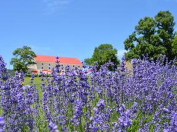 Springfield Manor Lavender Farm | Thurmont, MD 21788