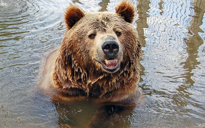 Living Treasures Wild Animal Park