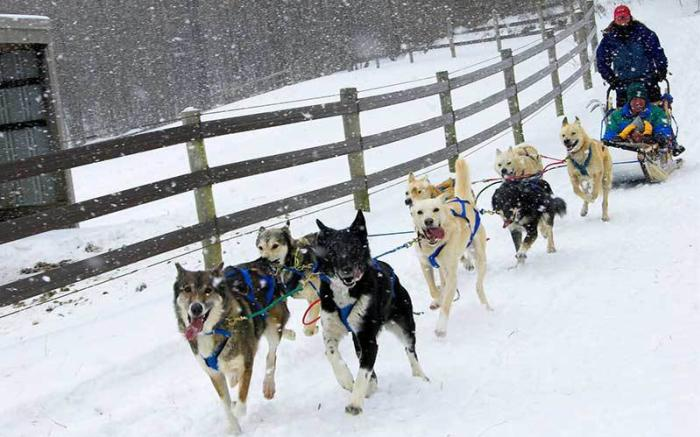 Dog Sledding - PA Family Resort - PA Ski Resort - Nemacolin Woodlands Resort