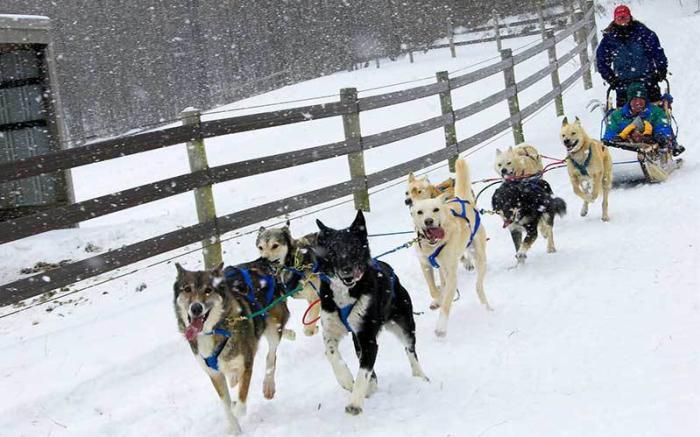 Dog Sledding - PA Family Resort - PA Ski Resort - Nemacolin Woodlands Resort