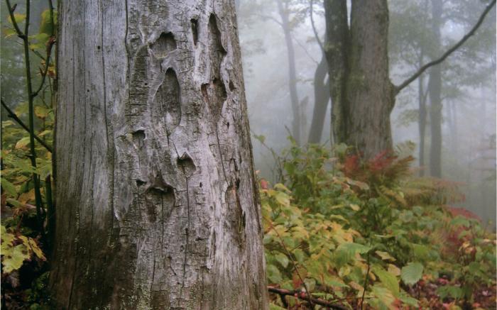 Laurel Mountain State Park