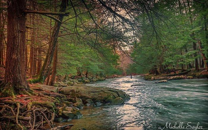 Laurel Hill Creek - Photo Credit: Michelle Saylor