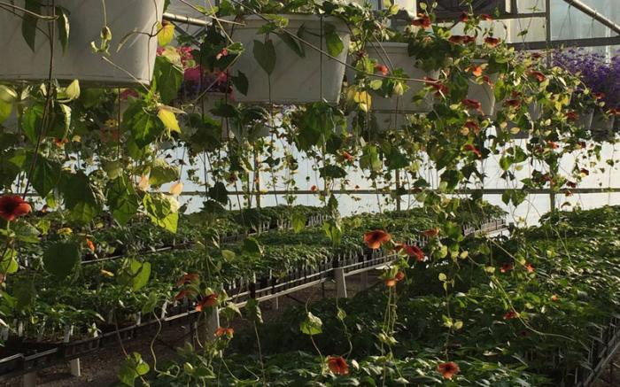 PLANT-IT EARTH GREENHOUSE