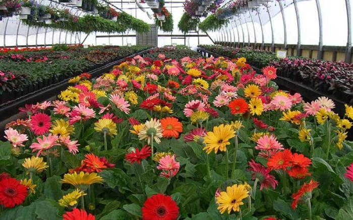 inside greenhouse 5