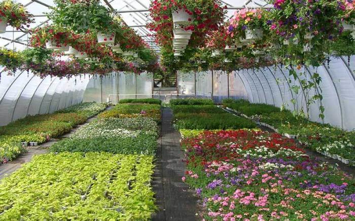 Inside greenhouse 2