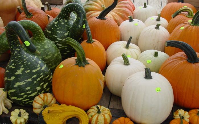 Somerset County Farmers' Market 2