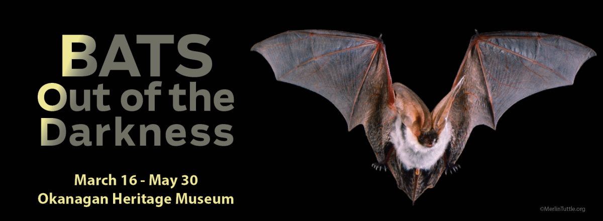 Bats out of the Darkness - Poster