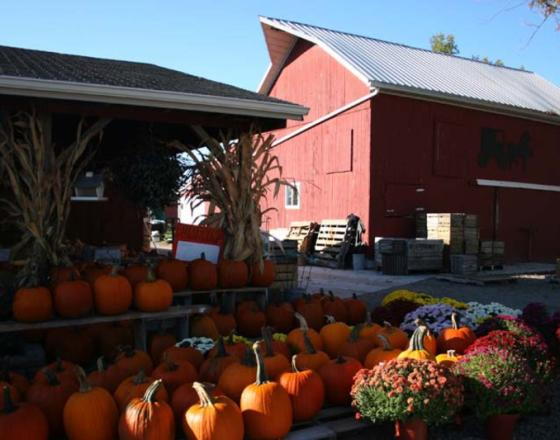 Pumpkin Patch Market