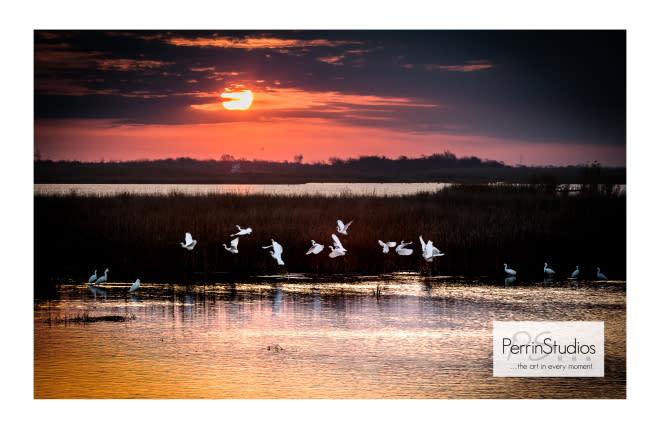 Perrin Studios Blog image