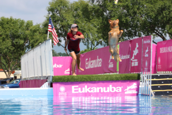 Dog - Dock Diving - Mountain Valley Cluster Dog Show