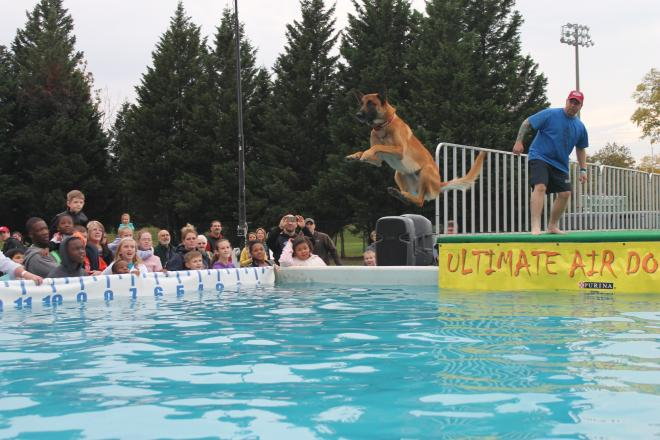 Roanoke Go Outside Festival - Dog Dock Jumping