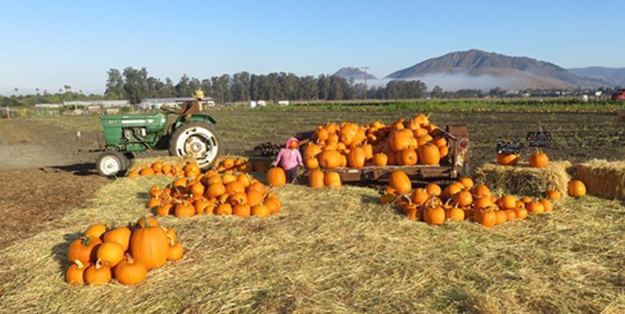 3rd Annual Fall Harvest Festival