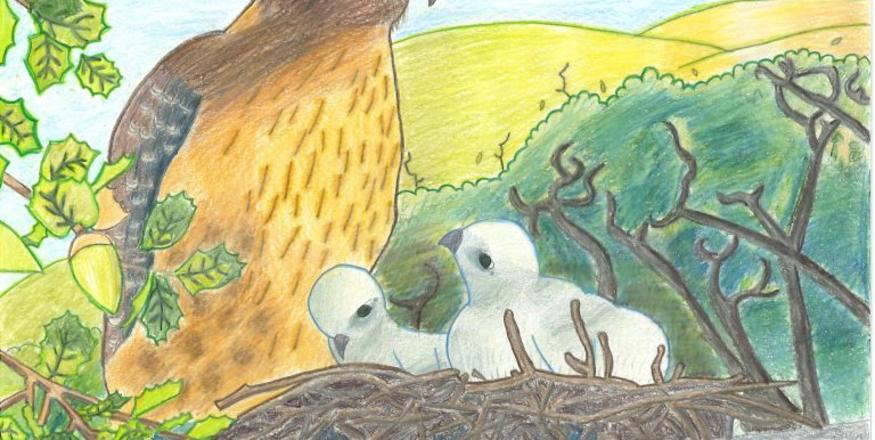 Youth Art Show: Wonders of the Oak Woodlands