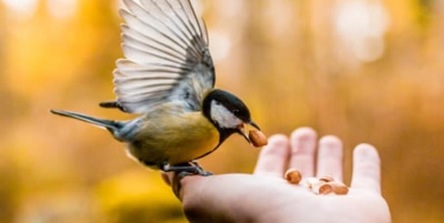 Birds of SLO 2019 Part 2