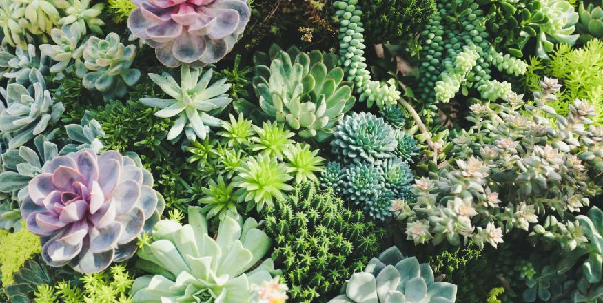Central Coast Cactus & Succulent Society Show and Sale