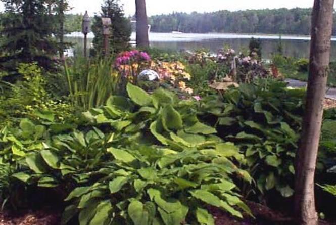 Cedar Hedge Gardens