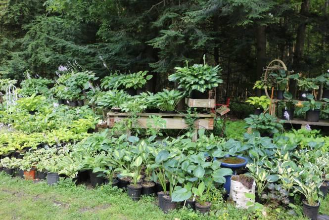 Interlochen Perennial Farm