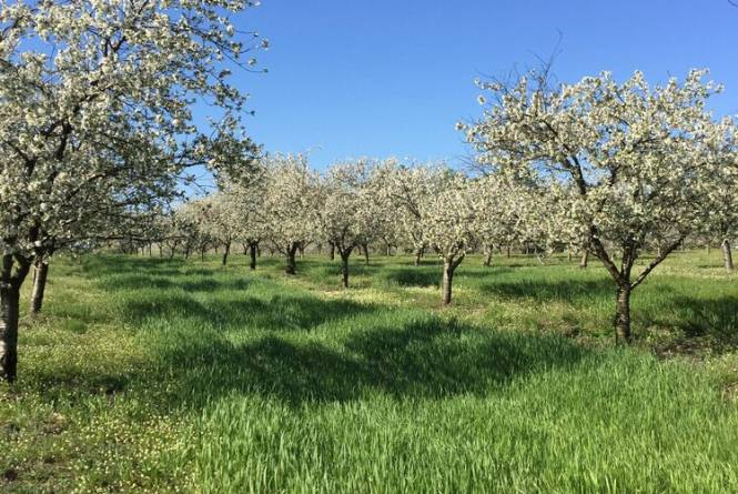 Nugent Orchards