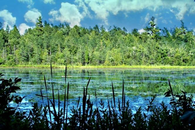 Pyatt Lake Nature Preserve